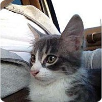 Adopt A Pet :: Fred - Mobile, AL