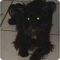 Adopt A Pet :: Mandy - Miami, FL