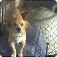 Adopt A Pet :: Mo - Fowler, CA