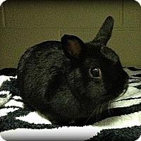 Adopt A Pet :: Moochi - Williston, FL