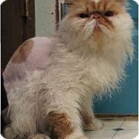 Adopt A Pet :: Hobbes - Davis, CA