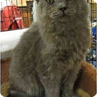 Adopt A Pet :: Smokey - Davis, CA