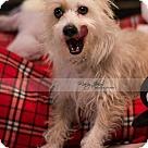 Adopt A Pet :: Roger Daltrey