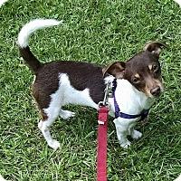Adopt A Pet :: Lt. Dan - Gainesville, FL