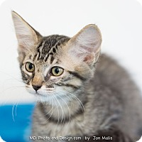 Adopt A Pet :: Pippi - Fountain Hills, AZ