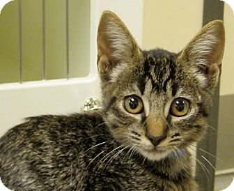Cats For Adoption In Georgetown Tx