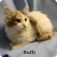 Adopt A Pet :: Buffy - Bentonville, AR