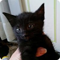 Adopt A Pet :: Daegen - Fairborn, OH