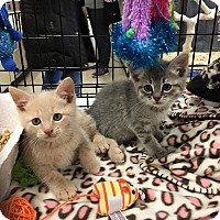 Adopt A Pet :: Seymour - Mount Laurel, NJ