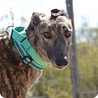 Adopt A Pet :: Paige - Tucson, AZ