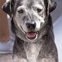 Adopt A Pet :: Buster - San Diego, CA