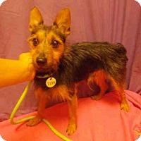 Adopt A Pet :: *MIKO - Upper Marlboro, MD