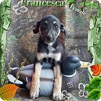 Adopt A Pet :: Francesca meet me 10/28 - Manchester, CT
