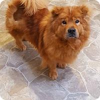 Adopt A Pet :: Lionel - Fennville, MI