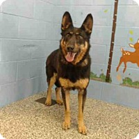 Adopt A Pet :: GIRLIE - San Bernardino, CA