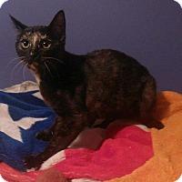 Adopt A Pet :: DEMI - Hampton, VA