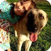 Adopt A Pet :: Cora Crawley - Austin, TX
