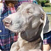 Adopt A Pet :: Cadie  **ADOPTED** - Eustis, FL
