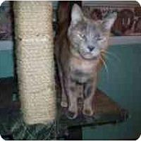 Adopt A Pet :: Miss Coco - Hamburg, NY