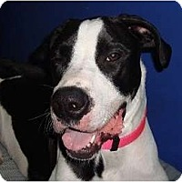 Adopt A Pet :: Daisy - Hamilton, ON