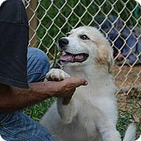 Adopt A Pet :: Eden - New Boston, NH