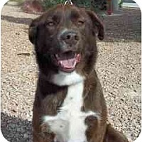 Adopt A Pet :: Buddy - Las Vegas, NV