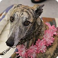 Adopt A Pet :: Emely - Brandon, FL