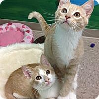 Adopt A Pet :: Kaz - Byron Center, MI