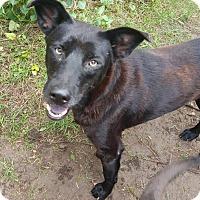 Adopt A Pet :: Sergio - Metairie, LA