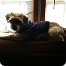 Adopt A Pet :: Smokey (COURTESY POST)
