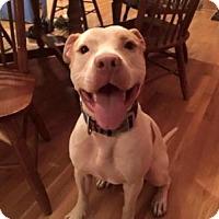 Adopt A Pet :: Simon - Thompson's Station, TN