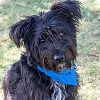 Adopt A Pet :: Sully - Patterson, CA