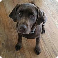 Adopt A Pet :: Sissy - Aurora, CO