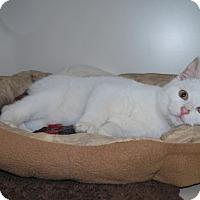 Adopt A Pet :: Cedar - New Castle, PA