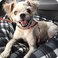 Adopt A Pet :: Bruiser - Las Vegas, NV