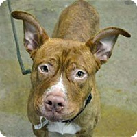 Adopt A Pet :: Curtis Mayfield - Troy, MI