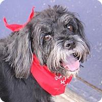 Adopt A Pet :: Sprocket - Phoenix, AZ