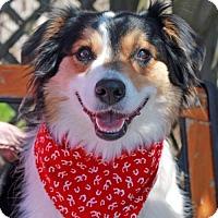 Adopt A Pet :: Malley-PENDING - Garfield Heights, OH
