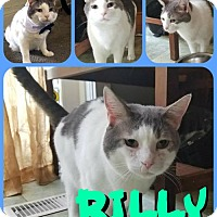 Adopt A Pet :: Billy - Baltimore, MD