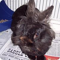 Adopt A Pet :: Fluffy - Olivet, MI