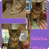 Adopt A Pet :: Sabrina - North Richland Hills, TX
