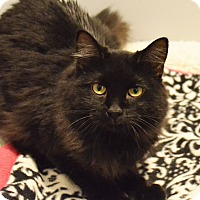 Adopt A Pet :: Denzel Washington - Lincoln, NE