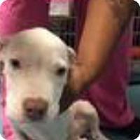 Adopt A Pet :: Stiles - Patterson, NY