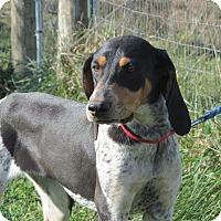 Adopt A Pet :: Luella - Staunton, VA