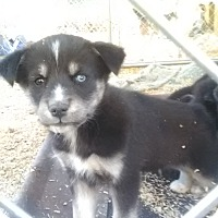 Adopt A Pet :: Tundra and Family - Staunton, VA