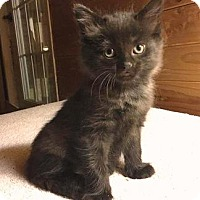 Adopt A Pet :: Stewart - Easy Going! - Huntsville, ON