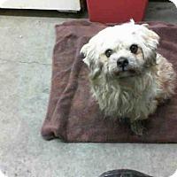 Adopt A Pet :: BARRY - San Martin, CA