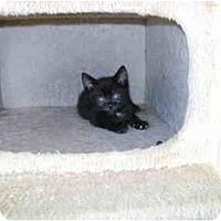 Adopt A Pet :: BABY GIRL - Etobicoke, ON