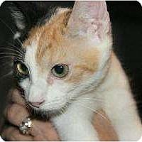 Adopt A Pet :: Lily - McDonough, GA