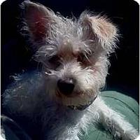 Adopt A Pet :: Marina - Oceanside, CA